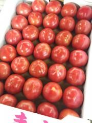 若松トマト1