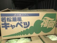 若松潮風キャベツ1